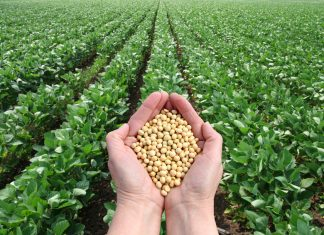 online agriculture degrees